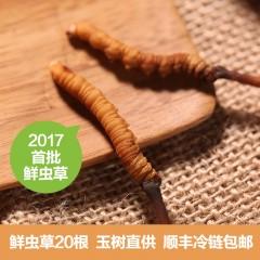 """藏蕴2017青海直供""""鲜的""""冬虫夏草20根惠民组"""