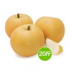 中国原产金汇来有机新高梨精品果